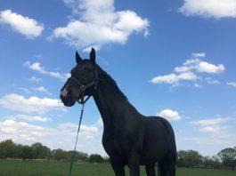 hipoterapia,kôň,kone,guest,lifestyle,printovemedia