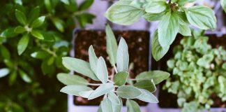 rastliny, precitajonline, printovemedia